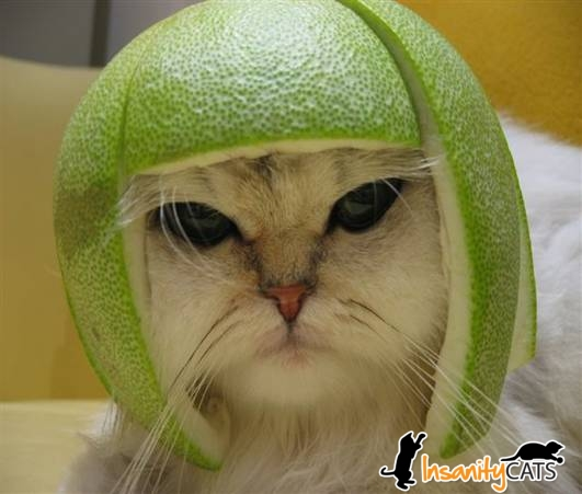 Cat with lime on its head